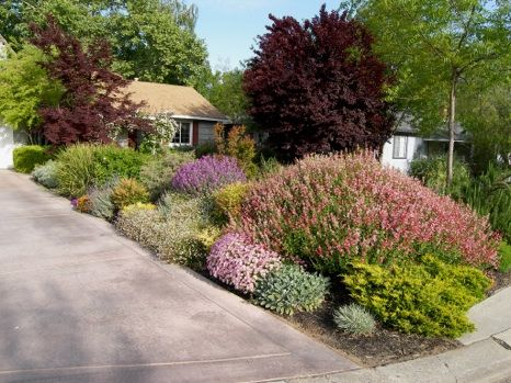Drought Resistant Landscapes for the Sacramento Area ...